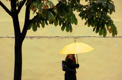 Yellow umbrella Stock Image