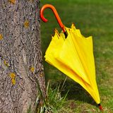 Yellow umbrella against the tree Royalty Free Stock Images