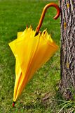 Yellow umbrella against the tree Stock Photography