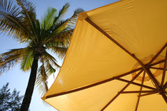 Yellow umbrella palm tree. Yellow Sun shade shielding bright tropical sun with palm tree overhead stock photos