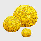 Yellow underwater sponge, polyps in form of brains Royalty Free Stock Photography