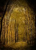 Yellow valley among beeches trees Stock Image