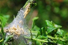 Yellow varmint caterpillar Royalty Free Stock Photos