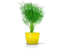 Yellow vase with palm Stock Photos