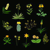 Yellow vector flowers Stock Photos