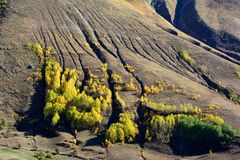Yellow, Vegetation, Wilderness, Tree Stock Images