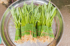 Yellow Velvet Leaf (Limnocharis flava Buch.) Plant or a weed, wa. Ter, vegetables selling at local Thai market, Northeast of Thailand royalty free stock image