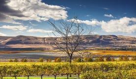 Free Yellow Vines Grapes Fall Vineyards Red Mountain Benton City Washington Stock Photo - 62424640