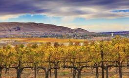 Free Yellow Vines Grapes Fall Vineyards Red Mountain Benton City Washington Royalty Free Stock Images - 62424809