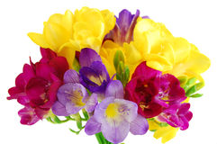 Yellow and violet fresia on white Stock Photo