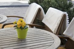 Yellow violets in a plastic pot on a table in a cafe and wicker chairs with white plaids Royalty Free Stock Image