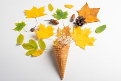 Yellow waffle cone with dried leaves of autumn leaves on a white background, flat lounger, top view.Art. Minimal rustic minimalism fall decor holiday card royalty free stock images