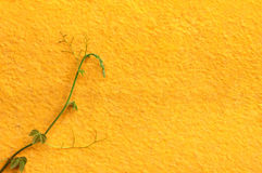 Yellow wall background Stock Image
