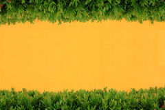 Yellow wall and bush Stock Images