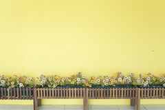 Yellow wall with flower Royalty Free Stock Photo