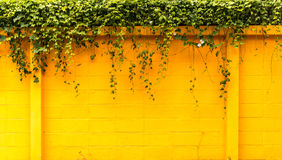 Yellow wall with foliage Stock Photography
