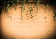 Yellow wall with foliage Royalty Free Stock Image