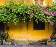 Yellow wall, Hoi An - Vietnam. Brown ancient wooden door on yellow wall royalty free stock photos