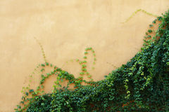 Yellow wall with plant. Plant and yellow wall background Stock Photos