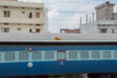 Yellow wasp perched on rail of train window in India. Bite royalty free stock photo