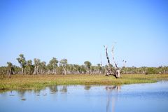 Yellow Water Billabong Royalty Free Stock Photos