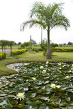 Yellow water lily pond with palm trees. Stock Photography