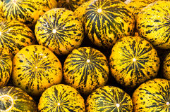 Yellow Water Melons Stock Photography
