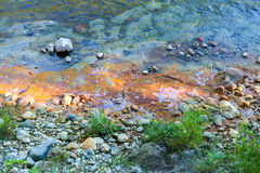 Yellow water near the shore of a mountain river Stock Images