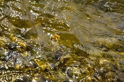 Yellow Water Reflection with Single Leave Royalty Free Stock Photography