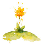 Yellow watercolor flower Royalty Free Stock Photography