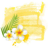 Yellow watercolor with frangipani Royalty Free Stock Photography