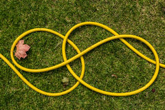 A yellow waterhose laying on the lawn. A used yellow waterhose laying on the lawn Stock Images