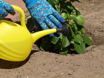 Yellow watering can Stock Photography