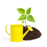 Yellow watering can and a young green plant isolated on white ba Royalty Free Stock Images