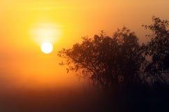 Yellow Waters Sunrise Stock Image