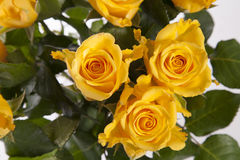 Yellow wedding roses Stock Photography