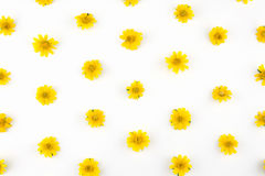 Yellow Wedelia flowers pattern Stock Photography