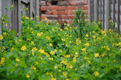 Yellow Weeds in alley 8 Royalty Free Stock Photos