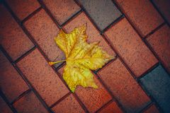 Yellow wet autumn leave on the background Stock Photo