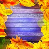 Yellow wet autumn leaves on the background. EPS10 Stock Photos
