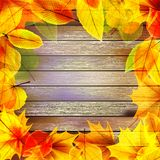Yellow wet autumn leaves on the background. EPS10. Yellow wet autumn leaves on the background a dark old wood. plus EPS10 vector file Stock Image