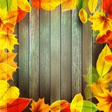 Yellow wet autumn leaves on the background. EPS10 Stock Photography