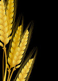 Yellow wheat. On a black background Royalty Free Stock Photo