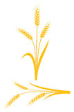 Yellow wheat ears on a white background. Vector illustration Royalty Free Stock Photo