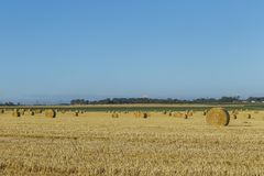 Yellow wheat field with straw bales after harvesting on a sunny day in Normandy, France. Country landscape, agricultural. Fields in summer. Environment friendly Stock Images