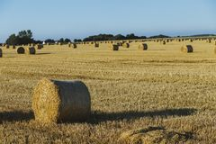 Yellow wheat field with straw bales after harvesting on a sunny day in Normandy, France. Country landscape, agricultural. Fields in summer. Environment friendly Stock Image