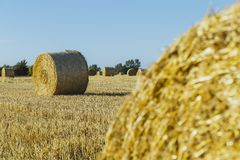 Yellow wheat field with straw bales after harvesting on a sunny day in Normandy, France. Country landscape, agricultural. Fields in summer. Environment friendly Stock Photography