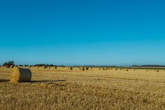 Yellow wheat field with straw bales after harvesting on a sunny day in Normandy, France. Country landscape, agricultural. Fields in summer. Environment friendly Royalty Free Stock Images