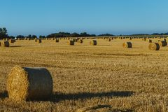 Yellow wheat field with straw bales after harvesting on a sunny day in Normandy, France. Country landscape, agricultural. Fields in summer. Environment friendly Royalty Free Stock Image