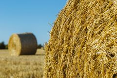 Yellow wheat field with straw bales after harvesting on a sunny day in Normandy, France. Country landscape, agricultural. Fields in summer. Environment friendly Royalty Free Stock Photo